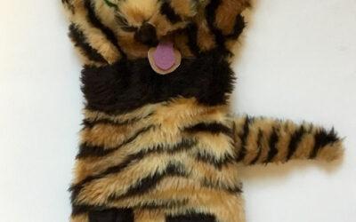 Mr Tiger 2019